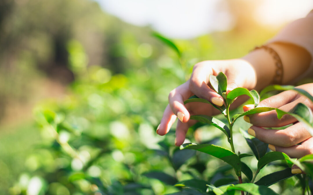 Fairtrade Fortnight: Win a Hampstead Tea hamper